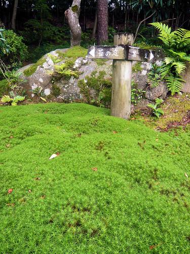 Yoshikien Garden, Nara - Moss