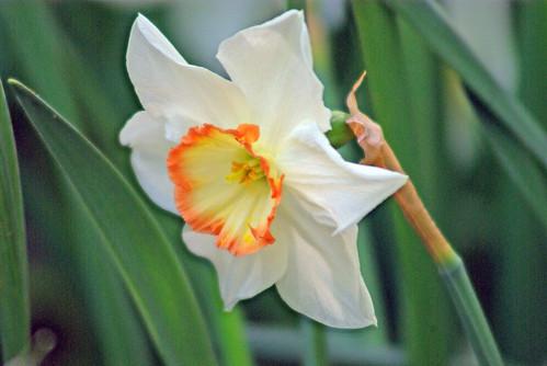 white flower, istanbul , pentax k10d