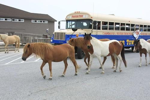 Small herd of ponies