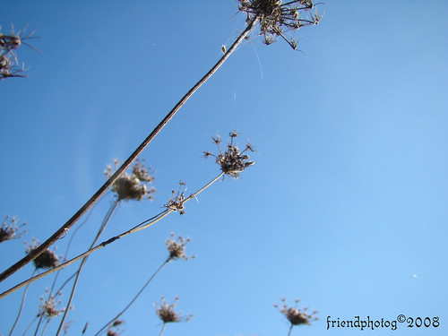 Weeds 3 - sig
