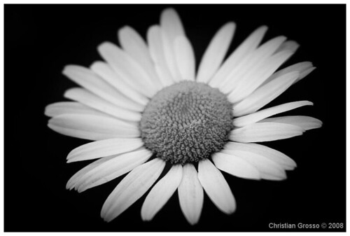 """Flores • <a style=""""font-size:0.8em;"""" href=""""http://www.flickr.com/photos/20681585@N05/3108362745/"""" target=""""_blank"""">View on Flickr</a>"""