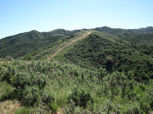 Placerita Canyon Loop 04