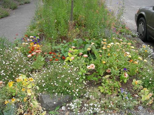 More of kid's garden