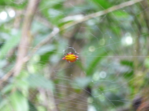 Blurry rainforest spider