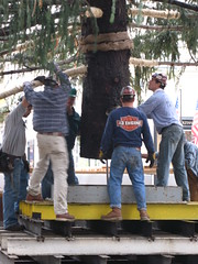 Rockefeller Christmass Tree Arrives NYC