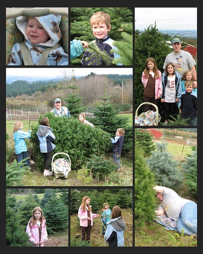 Christmas Tree 2008 Collage