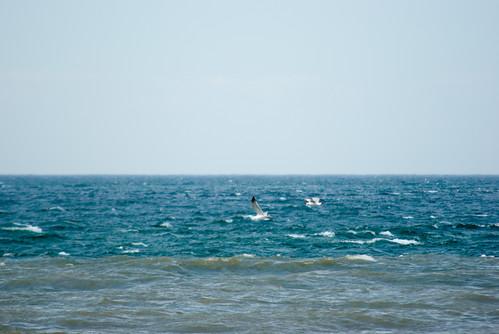 Blacksea scene with seagulls, Istanbul, Pentax K10D