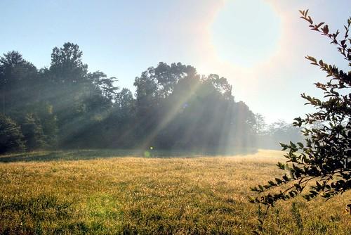 Big Morning Sun