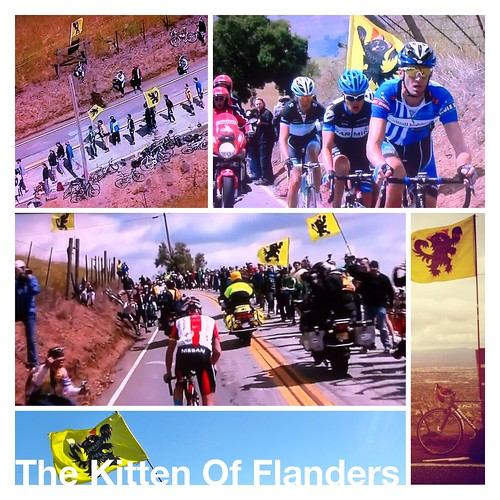 Kitten of Flanders Collage