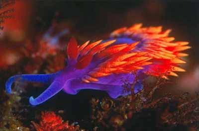 2499630048 5753cb30c6 o Criaturas inacreditáveis do fundo do mar