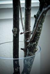 tree-19