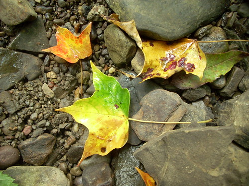 Fall - I mean Late Summer - leaves
