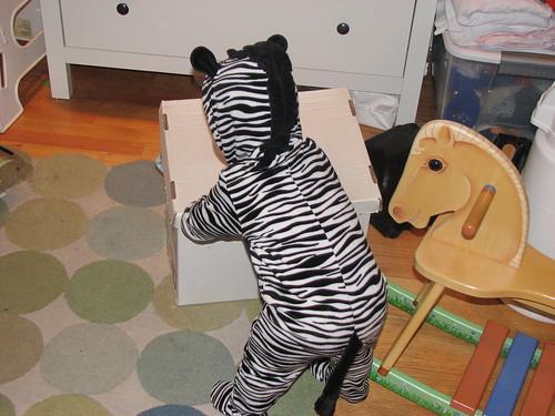 Crouching Zebra