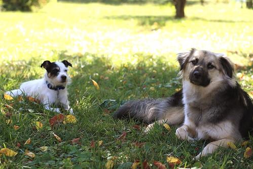 Petey and Jake