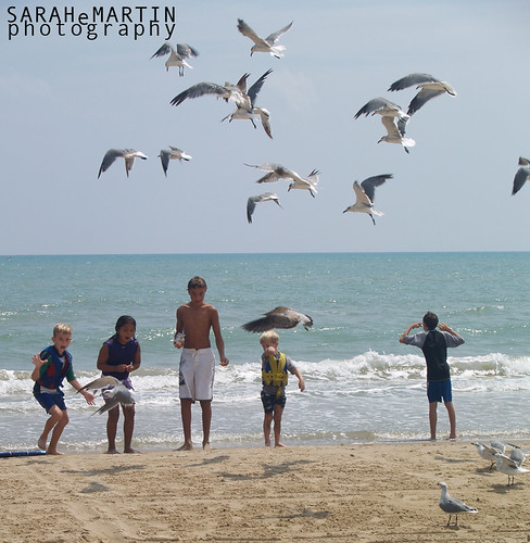 The Beach - Kids & Seagulls