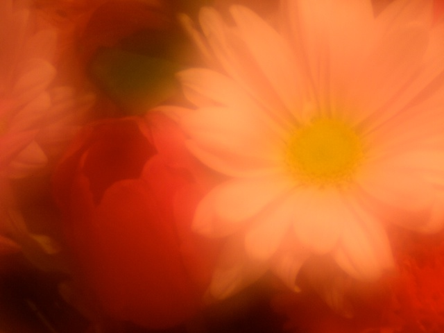 Zoneplate flowers