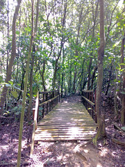 Kent Ridge Park Mountain Bike Trail by Icemoon via Flickr