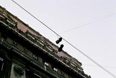 Zapatos I