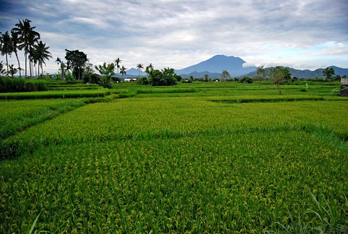 Keep Bali Green by duadunia.