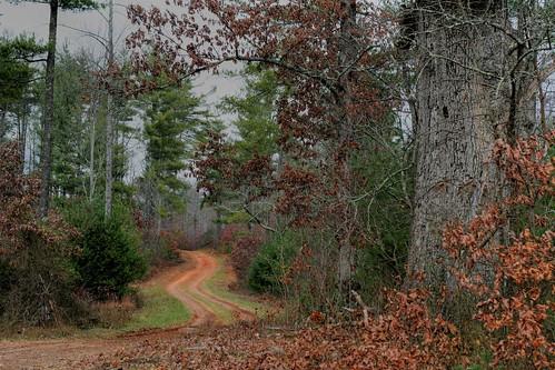 The Walking Road