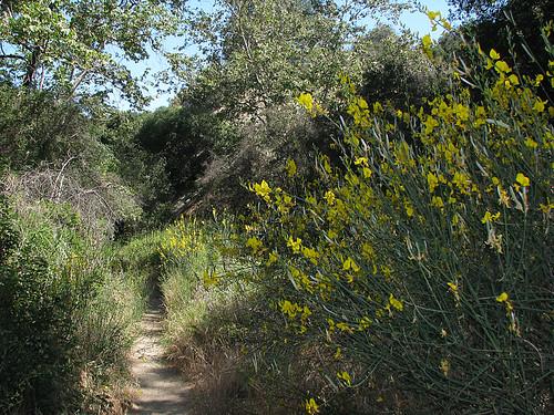 Santa Ynez Trail 05