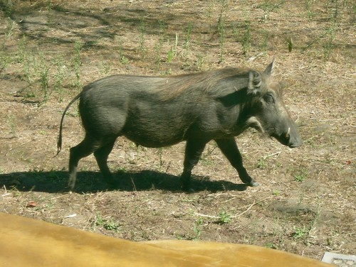 The Warthog Trail by you.