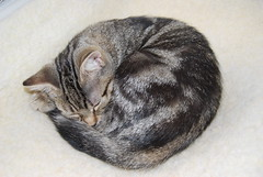 Curled up in a ball