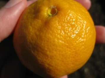 an orange (for lunch)