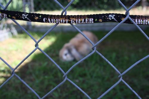 Carrot Killer - 26.06.2011