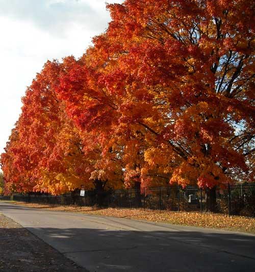 Oak Street - Rogers, Arkansas