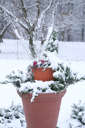 My winter container planting
