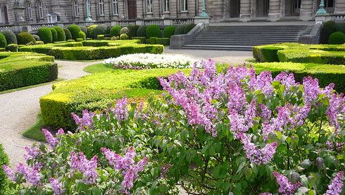 Lilac in front of the Palais Royal, Brussels