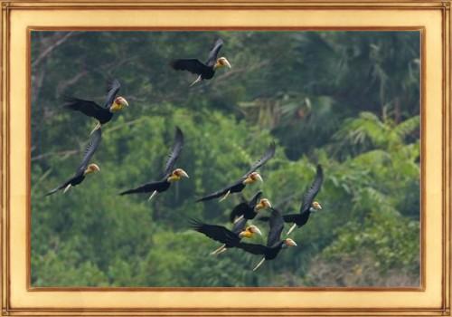 BirdEcology-Hornbills