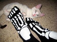 NiNJA a'SCAREDY CAT