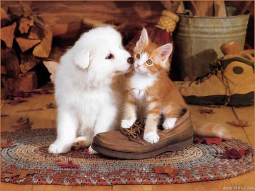 1153054006dog-kiss-cat