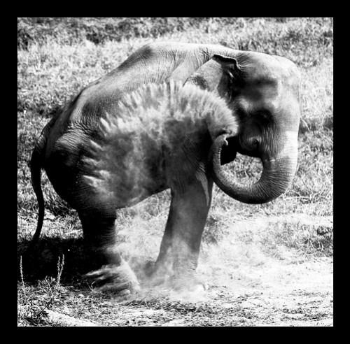 Elephant Nature Park, Chiang Mai Thailand 2/08
