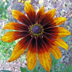 Flowers 072508 (15)