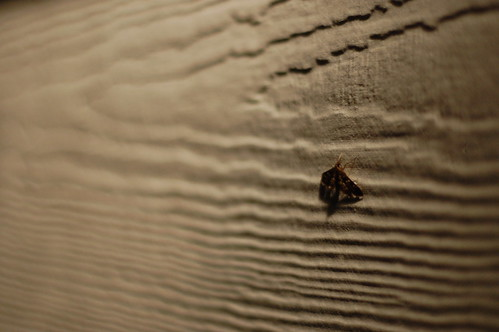 Random Photo of a Moth