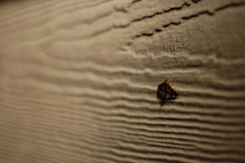 Random Photo of a Moth