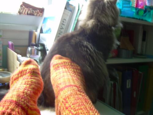 Diagonal Rib socks (and bothering the cat)