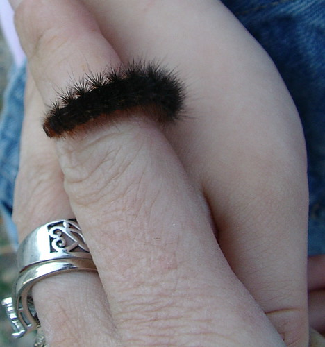 fuzzy friend for a day