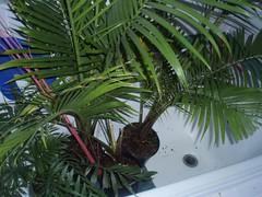 gateway palms