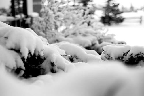 snowy shrubs at church
