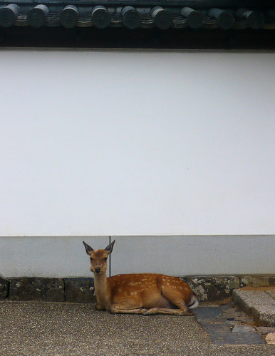 Nigatsu-do pavilion - Deer