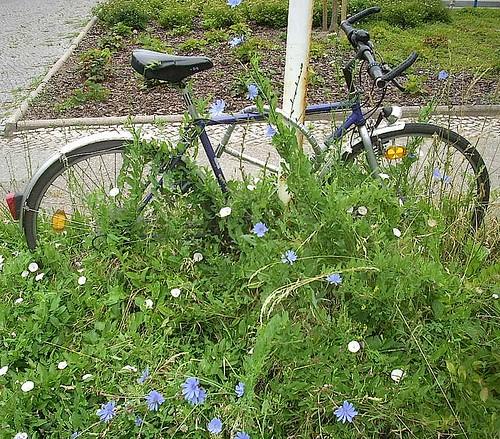 Vergessenes Fahrrad 2