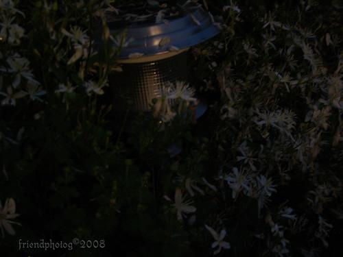 overgrown - sig