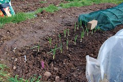 090201-allotment013