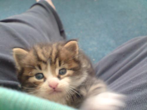 Emo-kitty snuggles