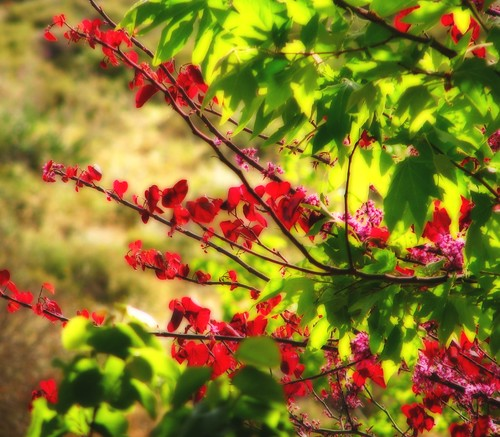Coloured leaves 2