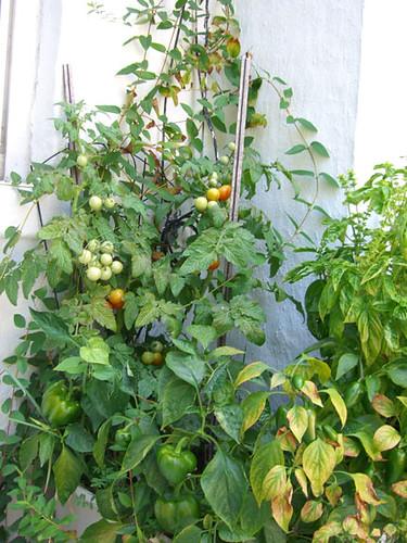 garden grown